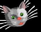 RadioKot  аватар